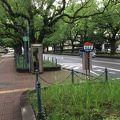 写真:宮崎県庁前楠並木通り