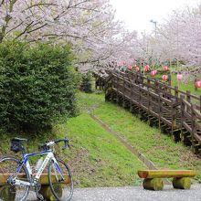 しまなみ一の桜の名所