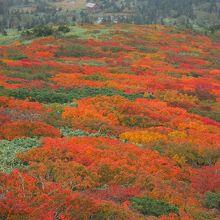 三ツ石山の紅葉と三ツ石山荘