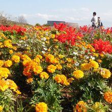 四季の花がきれいです