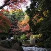 中央休憩所から見る紅葉
