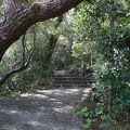 写真:椿の小径