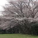 秋ケ瀬公園