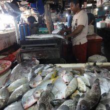 魚市場を訪問しました