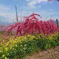 写真:浅間園