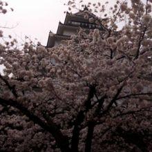 桜と鶴ヶ城
