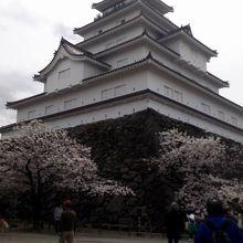 別角度から桜と鶴ヶ城