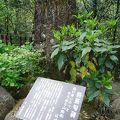 写真:芭蕉句碑 (天岩戸神社)