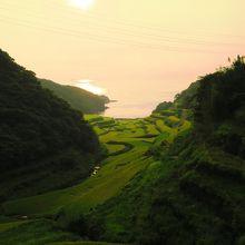 海沿いの棚田