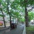 写真:馬場大門のけやき並木