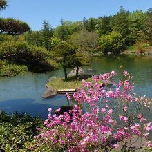 日本庭園。珍しい盆栽もあります。