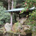 写真:芦ノ湖のけけら木