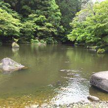 池には恋も泳いでいます。