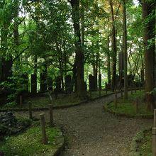 樹林のあいだを縦横に走る小道