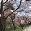 桜が美しい