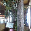 写真:大久野島ビジターセンター