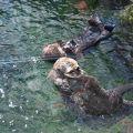 写真:バンクーバー水族館