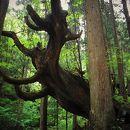 21世紀の森