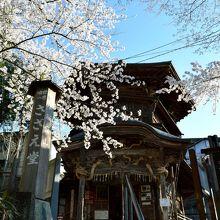 不思議な構造のさざえ堂には桜も似合います
