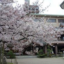 4月上旬桜が満開でした。