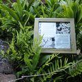 写真:ケパニワイ公園