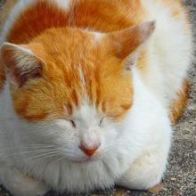 香川県の男木島へ(通称:猫島)猫を求めて!