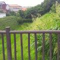 写真:川越城中ノ門堀跡