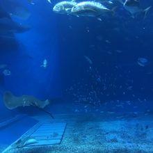 美ら海水族館、海の中♪
