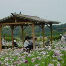 小岩菖蒲園まつり