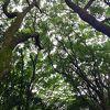 荘厳な樹々