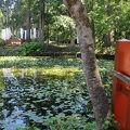 写真:出羽三山神社の鏡池
