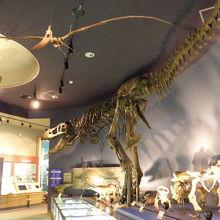 無料で恐竜が見られる博物館!!