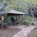 写真:六義園 滝見の茶屋