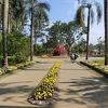熱帯の花々