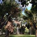 写真:フォスター植物園