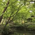 写真:六義園 つつじ茶屋