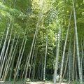 仙巌園(磯庭園) 江南竹林