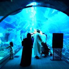 子供たちに嬉しい、大きな水族館