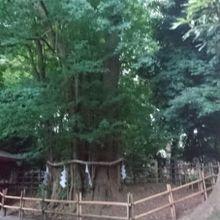 催しが多い武蔵府中の神社