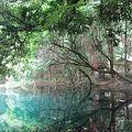 写真:丸池様