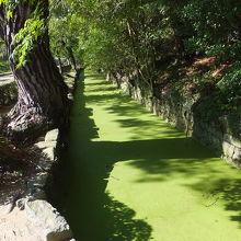 芙蓉峰の下のお堀?緑の絨毯みたいで、緑の下が水なのか不明。