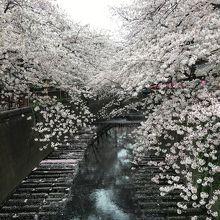 桜は圧巻、しかし混雑注意