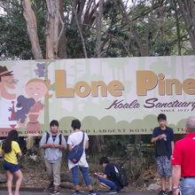 100頭以上のコアラ カンガルーやエミューも触れます。