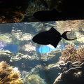 写真:ワイキキ水族館