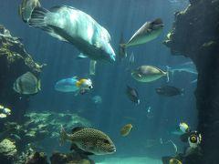 ニューカレドニア ラグーン水族館