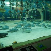 コスパ最高な水族館