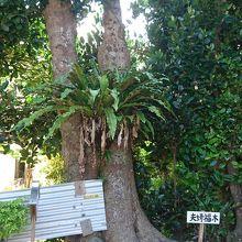 パワースポットにもなっている木です。