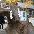 写真:日光二荒山神社の御神木