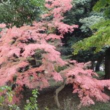 上野大仏付近の紅葉
