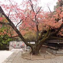 上野東照宮参道の紅葉